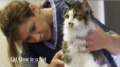 New #catowner Tip - Get Close to a Vet! @easyologypets