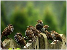 birds.....