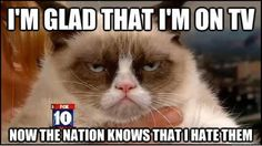 Best Of Grumpy Cat – 35 Pics