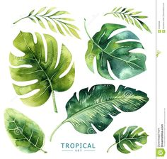 Hand Drawn Watercolor Tropical Plants Set. Exotic Palm Leaves, J Stock Illustration - Illustration of brazil, nature: 91656498