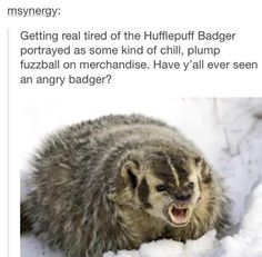 I am a Hufflepuff, and I can tell you, we're the chill badger on the outside, but on the inside, the angry badger is just waiting for you to hurt someone we love. Don't make that mistake.