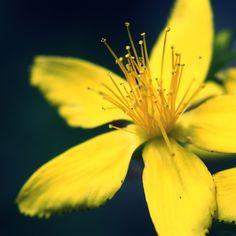 Yellow Flower Macro #iPad #Air #Wallpaper