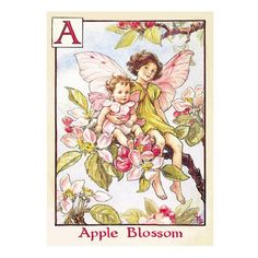 Green Flash Postcard FF-021 Apple Blossom Fairies Cicely Mary Barker flower fairies Size : 105mm/148mm check more Green Flash products