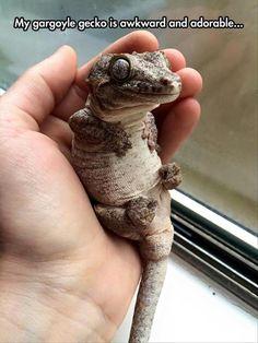 Pretty cute for a gecko.