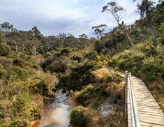 Best things to do in the Blue Mountains: The Charles Darwin Walk