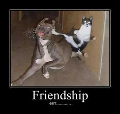 This is going to sound weird but this picture totally represents me and cin!!!:) looove ya bro