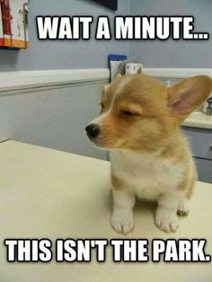 cute dolphins with captions 30 Funny animal captions part 18 30 pics funny high puppy meme Funny Animal Jokes, Funny Dog Memes, Cute Funny Animals, Cute Baby Animals, Funny Dogs, Cute Dogs, Funny Quotes, Super Cute Animals, Cute Puppy Meme