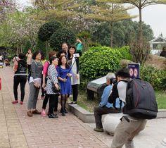 Guangzhou Flowers - Guangdong Province , China , Photos   Synotrip