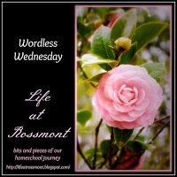 Life at Rossmont: Wordless Wednesday, June 13 {with link up}