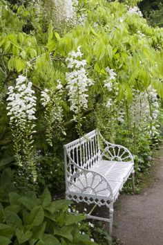 Wisteria and bench in Hidcote Manor Garden~English Gardens~