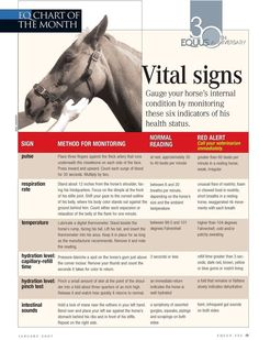 Gauge your horse's internal condition with the help of this vital signs chart from the editors of EQUUS magazine. Vital Signs Chart, Dressage, Reining Horses, Appaloosa Horses, Horse Information, Horse Care Tips, Horse Anatomy, Horse Facts, Horse Camp