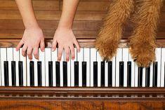 Piano Player, Music, Musica, Musik, Muziek, Music Activities, Songs