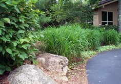 Foundation Border Plantings