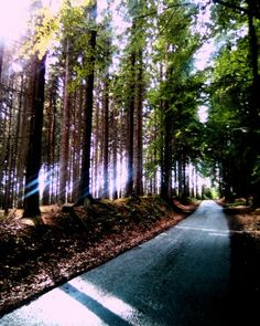 V lese je krásně - příroda - Fotografie - Myslivost, lovectví, myslivecká videa…