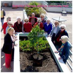 Waterford Terrace Residents Plant Community Tree - La Mesa, CA