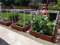 Garden is coming in nice - Imgur