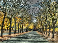 Wine road HDR