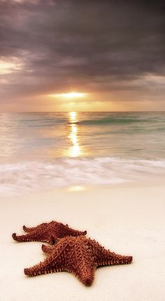 Starfish on the beach ~ Negril, Jamaica