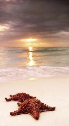 Starfish on the beach ~ Negril, Jamaica