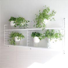 String Pocket hylle fra String er designet av Nisse Strinning. Denne hyllen er perfekt til kjøkkenet, badet og soverommet. Den er nett i…