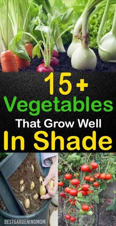 Just because a plant grows outside doesn't mean it thrives for direct sunlight. There are some vegetables that need only partial sunlight like an hour or two to grow healthy. Vegetable Garden For Beginners, Backyard Vegetable Gardens, Veg Garden, Vegetable Garden Design, Edible Garden, Gardening For Beginners, Outdoor Gardens, Garden Wagon, Starting A Vegetable Garden
