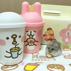 #Repost @hamsters_nunu_tw  . 最近被活動燒到不行啊啊啊 卡娜赫拉好可愛 是努努歐滴的勁敵 . #鼠#楓葉鼠#趴趴鼠#紫倉#倉鼠#銀狐鼠#三線鼠#小動物#寵物#仓鼠#療癒#可愛#ペット#ハムスター#かわいい#햄스터#hamsters#hamster#taiwan#twig #pet#animal#hamstergram#instapet#kawaii##:mou