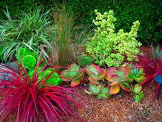 Native and / or drought tolerant California Plants