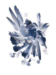 pigeon feathers | STILL (mary jo hoffman)