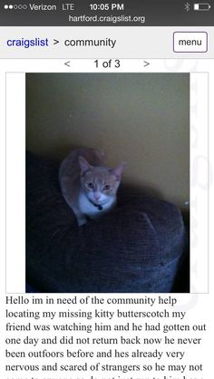 Https Www Facebook Com Ct Lost Pets Posts 773965742725303 Ct