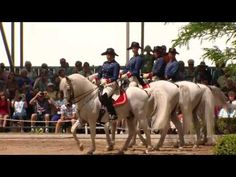 These Lipizzaner Horses Can Dance to Classical Music Lipizzan, Horse Dance, All The Pretty Horses, White Horses, Dressage, Classical Music, Music Songs, Animals, Youtube
