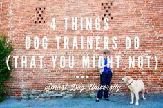 dog trainer, dog training, puppy training, Frederick, puppy class, obedience, clicker, Smart Dog University