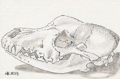 Schedel van een hond, Oost-Indische en Chinese inkt, 2013. Dog skull, Chinese ink,2013.