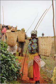 Malawian Tea Pickers going home. Tea Riffic, Traditional Baskets, Cocoa Tea, Tea Culture, Arte Popular, Juice Smoothie, Working Together, East Africa, Going Home