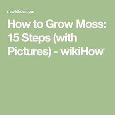 How to Grow Moss: 15 Steps (with Pictures) - wikiHow