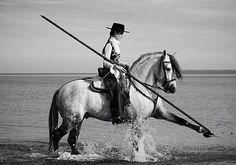 P.R.E. horse and rider.