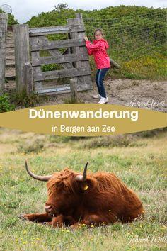 Wer durch die Dünen bei Bergen aan Zee in Nordholland wandert kann vieles entdecken. Auch auf einem sehr kurzen Spaziergang konnten wir die Schönheit genießen und trafen auf schottische Hochlandrinder. Auch ein spannender Ort für Kinder #reisenmitkindern #wandernmitkindern #wandernineuropa #holland #nordholland #naturschutzgebiet Bergen, Roadtrip Europa, In This Moment, Birthday, Outdoor, Hiking With Kids, Traveling With Baby, Outdoors, Birthdays