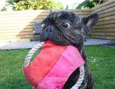Mijn Franse bulldog ❤️