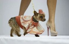 San Diego Humane Society fashion show