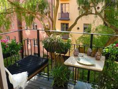 A small urban balcony with the air of a botanical garden thanks in part to the overhanging tree.
