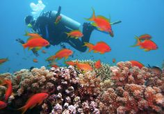 The coral world underwater feels like home away from home. Check out diveplanner app and plan your underwater dive. Fiji Culture, Fly To Fiji, Fiji Beach, Scuba Diving Equipment, Blue Hole, Beste Hotels, Fishing Photography, Visit Egypt, Das Hotel