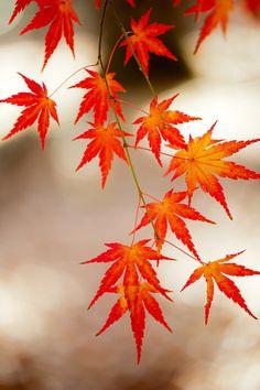 Memories of leaves | Flickr - Photo Sharing!