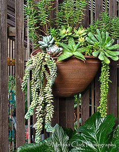 Succulent Hanging Basket ...