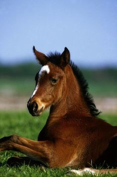Thoroughbred Foal Co Kildare Ireland Canvas Art - The Irish Image Collection Design Pics x All The Pretty Horses, Beautiful Horses, Animals Beautiful, Cute Animals, Baby Animals, Clydesdale, Appaloosa, Irish Images, Baby Horses