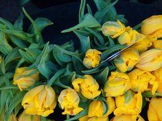 tulips.  Rob.
