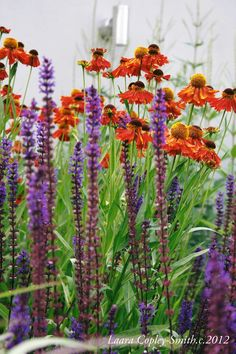 Perennials In the garden