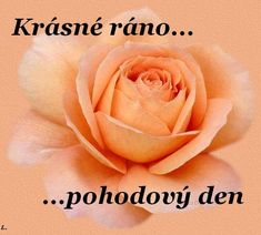 Dobré ráno obrázky, citáty a animace pro Facebook (stránka 3) - ObrazkyAnimace.cz Funny Texts, Good Morning, Happy Birthday, Flowers, Bom Dia, Happy Aniversary, Buen Dia, Happy B Day, Bonjour