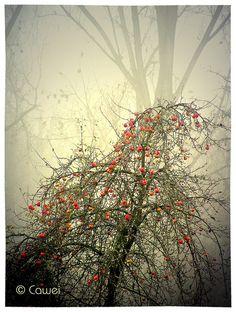 © Cawei Fog 1 by Cawei, via Flickr