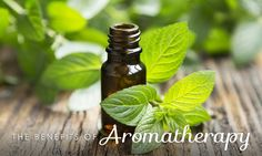 Top 5 Essential Oils for Allergies by Dr. Josh Axe Top 5 Essential Oils for Allergies by Essential Oils For Thyroid, Making Essential Oils, Essential Oil Uses, Peppermint Plants, Peppermint Oil, Peppermint Patties, Home Remedies, Natural Remedies, Herbal Remedies