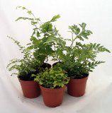 """Choosing plants for your terrarium. Mini Ferns for Terrariums/Fairy Garden -Assortment of 5 Different Plants-2"""" Pots"""