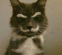 мудрый кот - Поиск в Google